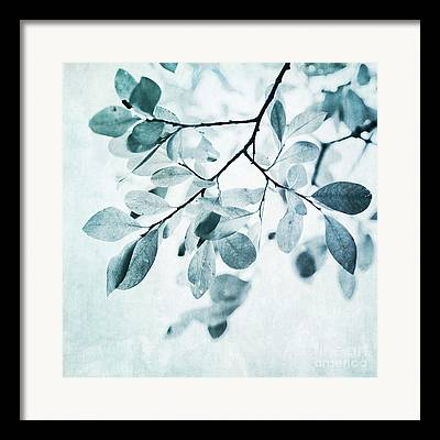 Tree Branches Framed Prints