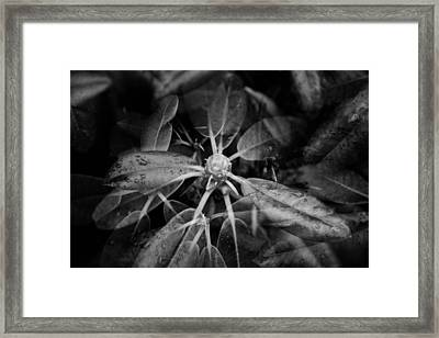 Leaves In Multiple Exposure Framed Print by Tommytechno Sweden