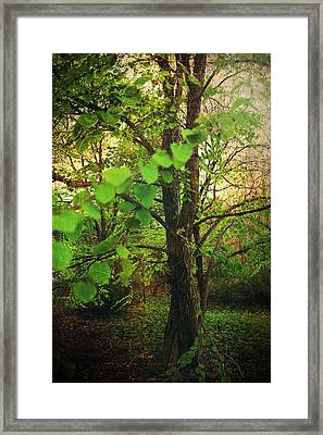 Leaves In My Hair Framed Print by Laurie Search
