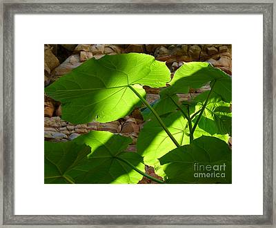 Leaves In Shadow Framed Print