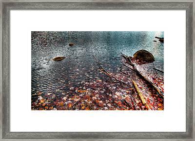 Leaves In The Lake Framed Print