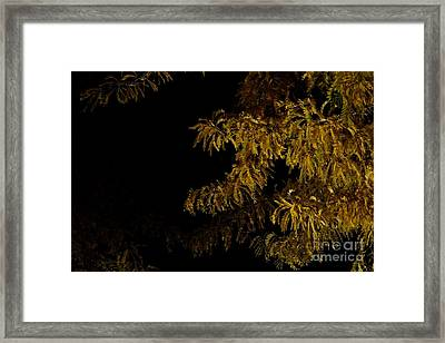 Leaves In The Night I Framed Print by Phil Dionne