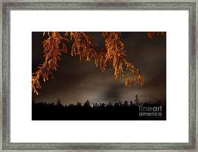 Leaves In The Night II Framed Print by Phil Dionne
