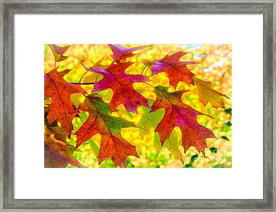 Leaves Framed Print by Janis Knight