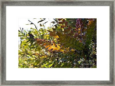 Leaves Framed Print by Kate Brown