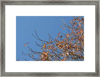 Leaves Left Framed Print by Regina Avila