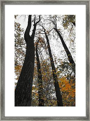 Framed Print featuring the photograph Leaves Lost by Photographic Arts And Design Studio