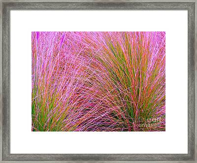 Leaves Of Grass Framed Print by Ann Johndro-Collins