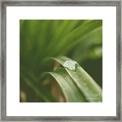Leaves Of Green Framed Print by Ella Kaye Dickey