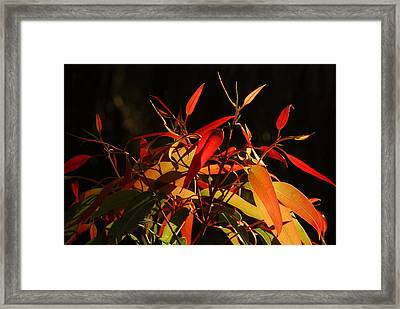 Leaves Of Red And Gold Framed Print