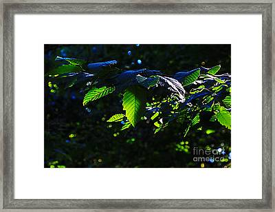 Leaves Of Shining Framed Print by Tim Rice