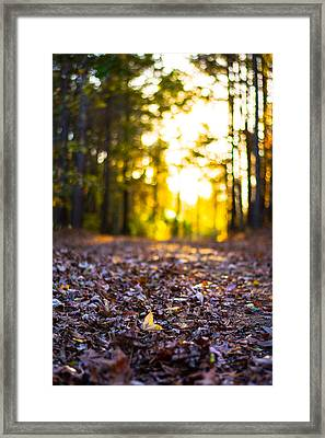 Leaves On A Forest Trail Framed Print by Parker Cunningham