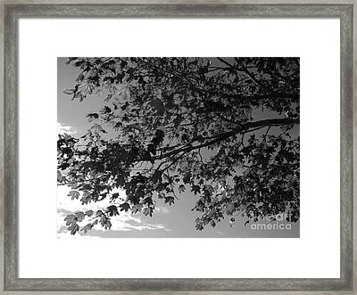 Framed Print featuring the photograph Leaves On A Tree by Laura  Wong-Rose