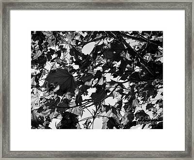 Framed Print featuring the photograph Leaves On A Tree Ll by Laura  Wong-Rose