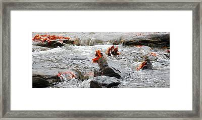 Leaves On Falling Water Framed Print