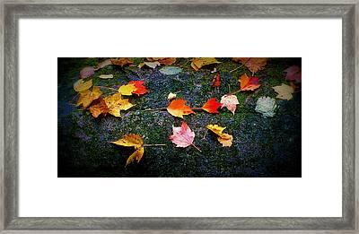 Leaves On Rock  Framed Print