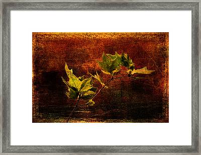 Leaves On Texture Framed Print