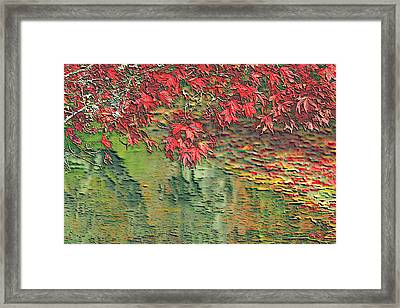 Leaves On The Creek 3 Framed Print by L Brown