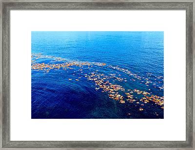Leaves On The Ocean Framed Print