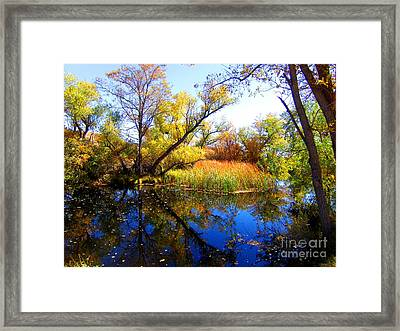 Leaves On The Pond Framed Print by Marilyn Diaz