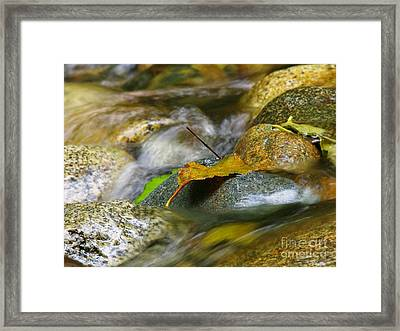 Leaves On The Rocks Framed Print
