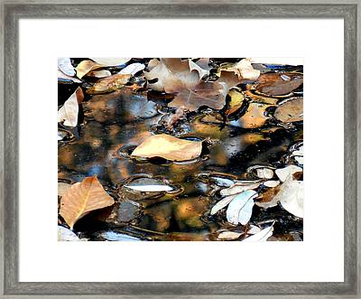 Leaves On The Waters Framed Print by Chris Gudger