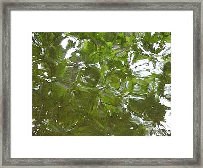 Leaves Reflected Framed Print