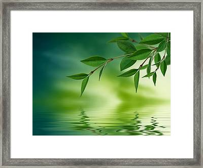 Leaves Reflecting In Water Framed Print by Aged Pixel