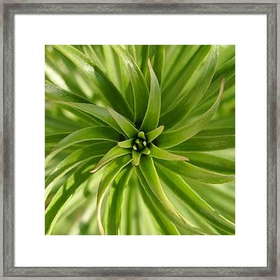 Leaves Spiral Framed Print