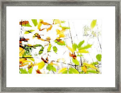 Leaves Splash Abstract 2 Framed Print by Natalie Kinnear