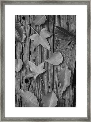 Leaves Still Life Framed Print