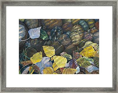 Leaves  Water And Rocks Framed Print