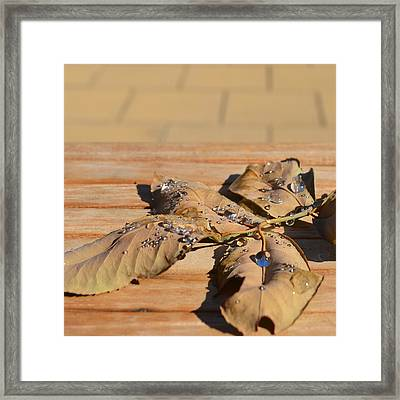 Leaves With Water 1.1 Framed Print by Cheryl Miller