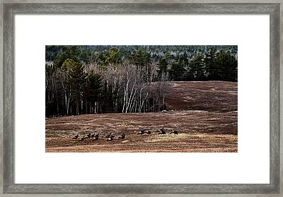 Leaving Town For The Holidays Framed Print by Susan Capuano