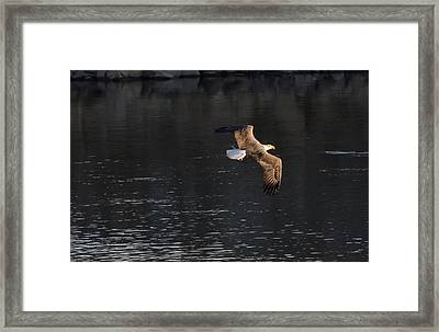 Framed Print featuring the photograph Leaving With Lunch by Gary Wightman