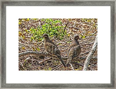 Left And Right Framed Print by Constantine Gregory