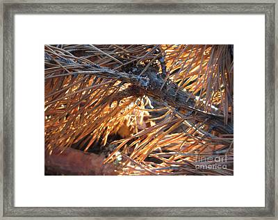 Left For Dead Framed Print by Martin Howard