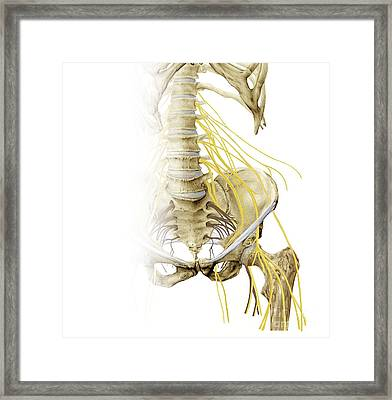 Left Hip And Nerve Plexus, Artwork Framed Print