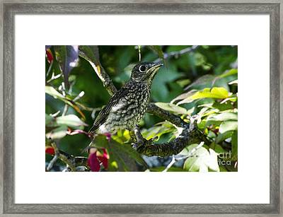 Left The Nest Framed Print