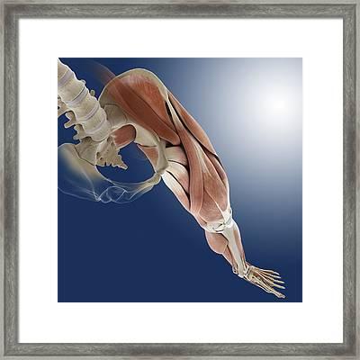 Leg Muscles, Artwork Framed Print