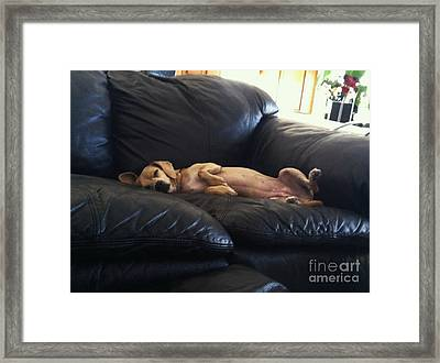 Leg Up Framed Print by Angela J Wright