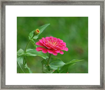 Framed Print featuring the photograph Legacy by Bob Sample