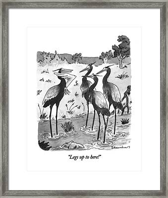 Legs Up To Here! Framed Print by Danny Shanahan