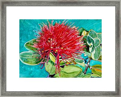 Lehua Blossom Framed Print by Terry Holliday