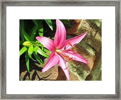 Leiron Framed Print by Sonali Gangane
