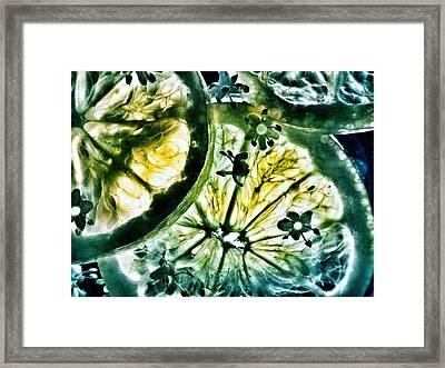 Lemon And Elderflower  Framed Print by Marianna Mills