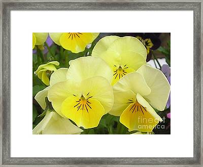 Lemon Beauties Framed Print by Joanne Simpson