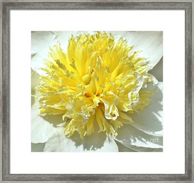 Framed Print featuring the photograph Lemon Drop by Lilliana Mendez