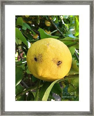 Lemon Face Framed Print by Nora Boghossian