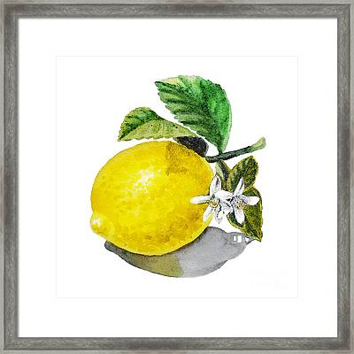 Lemon Flowers And Lemon Framed Print by Irina Sztukowski